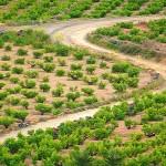 Vinitaly: Uno Stand Dedicato all'Alberello di Pantelleria