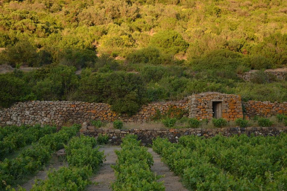dammuso-ghirlanda-pantelleria