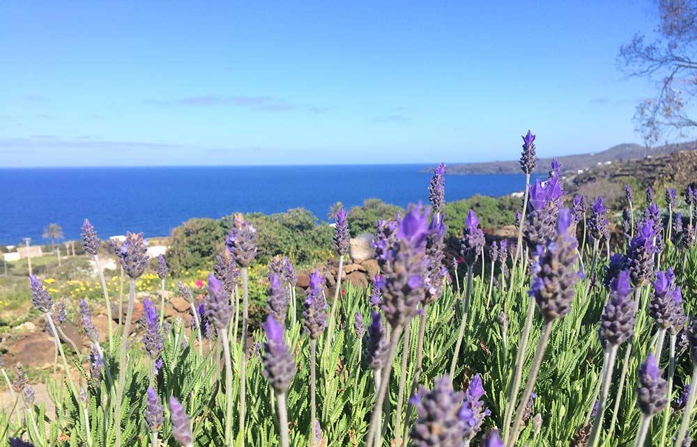 primavera-a-pantelleria-campobello
